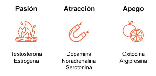 infografía sobre la pasión, la atracción y el apoyo