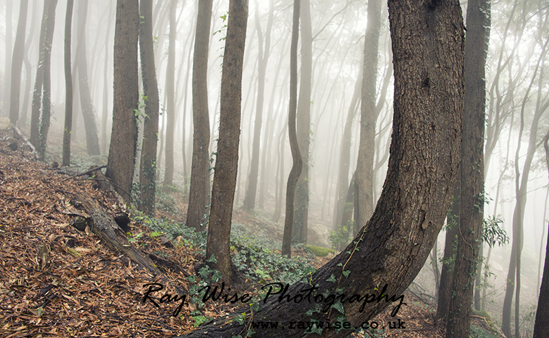 Blog: Mist and Fog