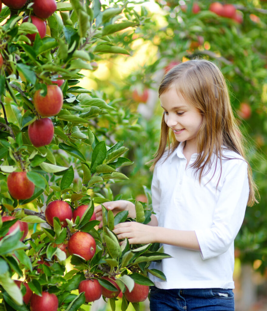 Apples and girl