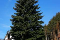 Zufahrt-Baum