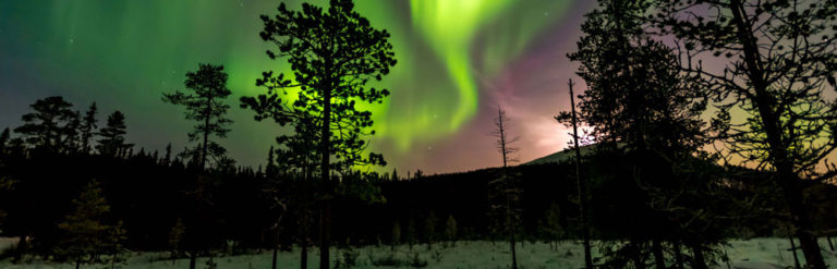 Northern lights safaris