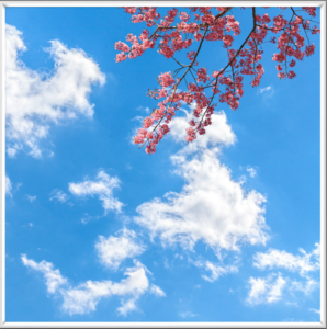 Single fake ceiling window with pink blossom and white clouds