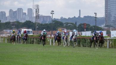 Photo of ختام من القمة لجائزة حمدان بن راشد للخيول العربية في ساوباولو