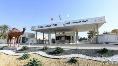Photo of جاهزية متكاملة لبلدية دبي لاستقبال عيد الأضحى بحملات تفتيشية شاملة