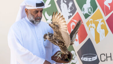 Photo of Fakhr Al Ajyal Falconry Championship launches a new category