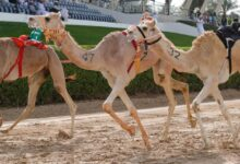 Photo of أنطلاق مهرجان سمو ولي عهد دبي للهجن