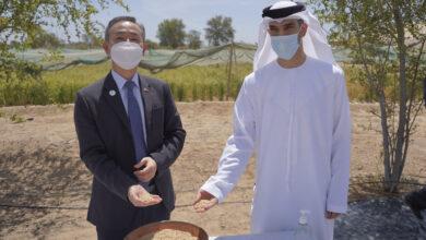 """Photo of """"التغير المناخي والبيئة"""" تسجل نجاحا مميزا للتجارب الأولية لزراعة الأرز بالدولة"""