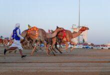 Photo of (الخوارة) نجمةً للثنايا البكار المحليات و(برلمان) بطلاً للجعدان