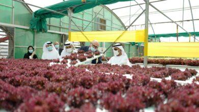 Photo of بلحيف النعيمي يناقش مع منتجي غذاء محليين أفكار تصميم مستقبل أمن واستدامة الغذاء