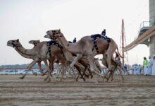 Photo of هجن الرئاسة والعاصفة يتقاسمان صدارة الثنايا بالمرموم