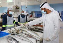 Photo of بلدية دبي تنظم ندوة افتراضية لتعزيز جهود المحافظة على الثروة السمكية