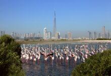 Photo of بلدية دبي تحتفل باليوم العالمي للأراضي الرطبة 2021