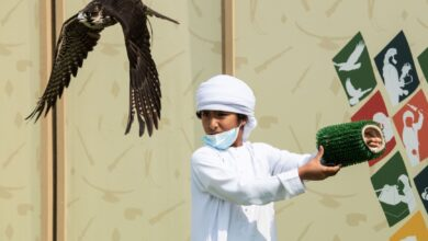 Photo of Young Emiratis keep sport of falconry fly higher