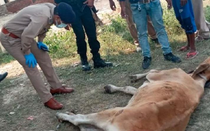 एसएसपी वाराणसी का दिखा पशु के प्रति प्रेम,सड़क किनारे दिखी असहाय गाय तो रुकवायी गाड़ी, थानाध्यक्ष को सौंपी इलाज की जिम्मेदारी