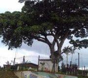 BILINGUAL-SCHOOL.-CENTRAL-AMERICA-CLASSIC-MERCEDES-LIMO-CITY-TOURS.-3-300x180