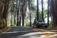 COSTA-RICA-PINE-FOREST.-MERCEDES-CLASSIC-LIMOUSINE-ADVENTURES