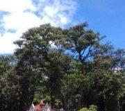 Parque España Park, Costa Rica CITY TOURS IN MERCEDES W123 300D LIMOUSINE