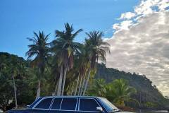 PALM TREE JACO BEACH LIMOUSINE COSTA RICA