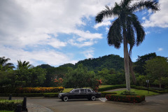 COSTA RICA LARGE PALM TREE AND MERCEDES LIMOUSINE