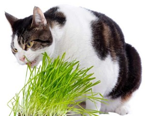 Cat Eating a Plant
