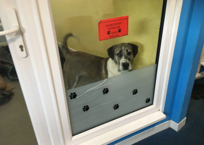 dog, mayflower sanctuary, charity