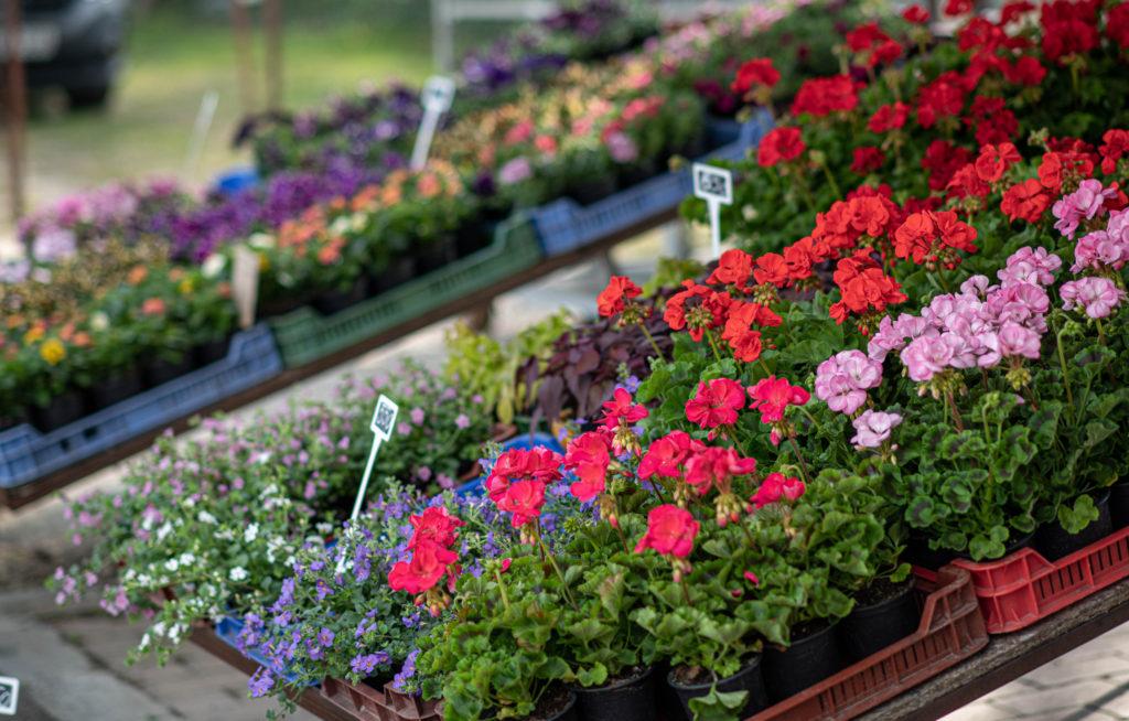 Fonyódi piac virágvásár