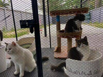 """เตรียมขายน้องแมวทอดตลาด เครือข่ายยานรก """" กุ๊กระยอง """""""