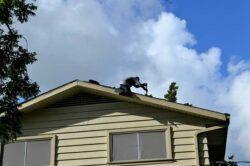 home grants low income e1603368667348