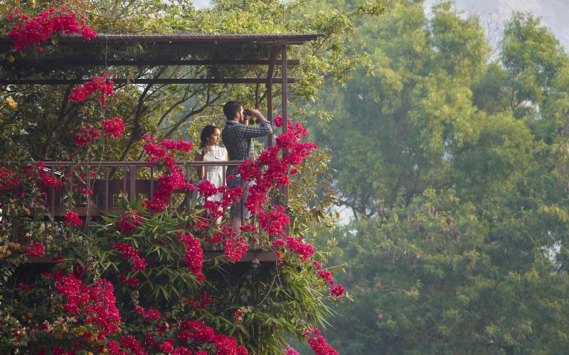 Bird Watching Image at resort near pune-Jalsrushti