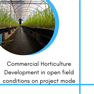 Commercial Horticulture Development in open field conditions on project mode