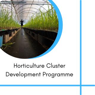 Horticulture Cluster Development Programme