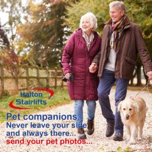 HS Pet Companions post_v1-01