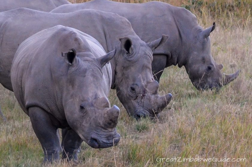 Thetford Private Game Reserve Harare Zimbabwe