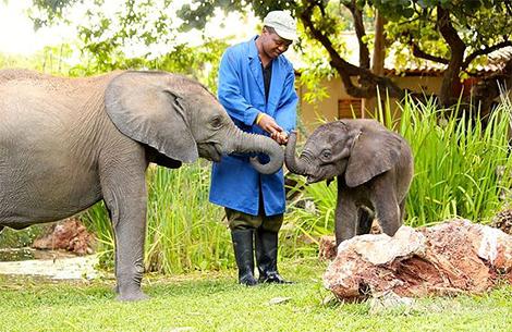 Wild is Life Harare Zimbabwe