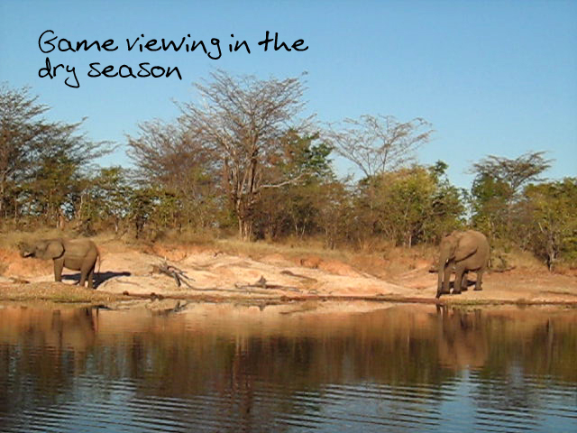Elephants in the dry season. Please credit GreatZimbabweGuide.com