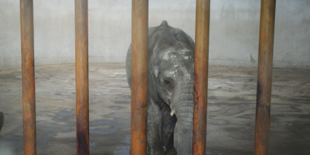 chinese zoo elephant