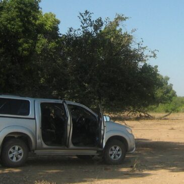 Driving in Zimbabwe: Top tips for self-drive visitors