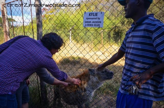 Bally Vaughan Twala Trust hyena