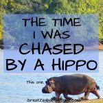 Chased by a hippo Zimbabwe Africa
