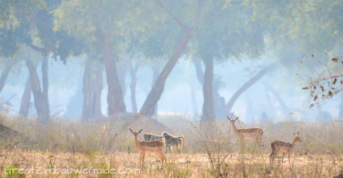 Mana Pools mist Zimbabwe