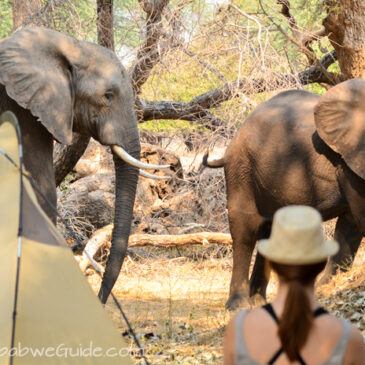 Travel journal 2013: Camping in Mana Pools