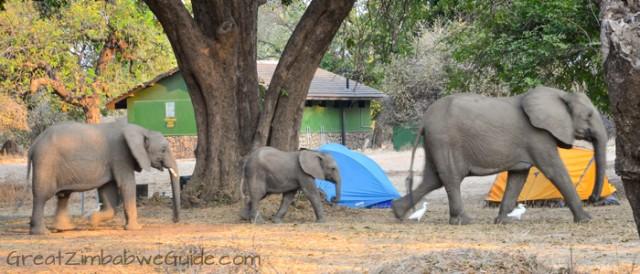 Mana Pools elephant 6