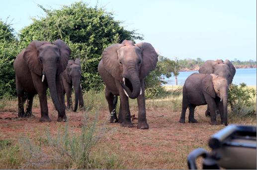 Rhino Safari Elephants
