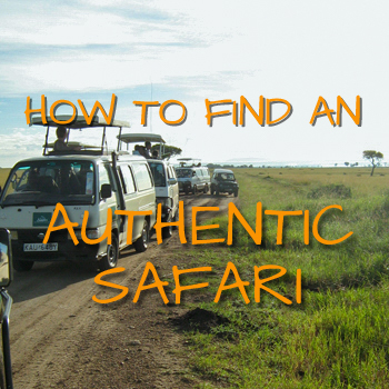 How to find an authentic safari Zimbabwe