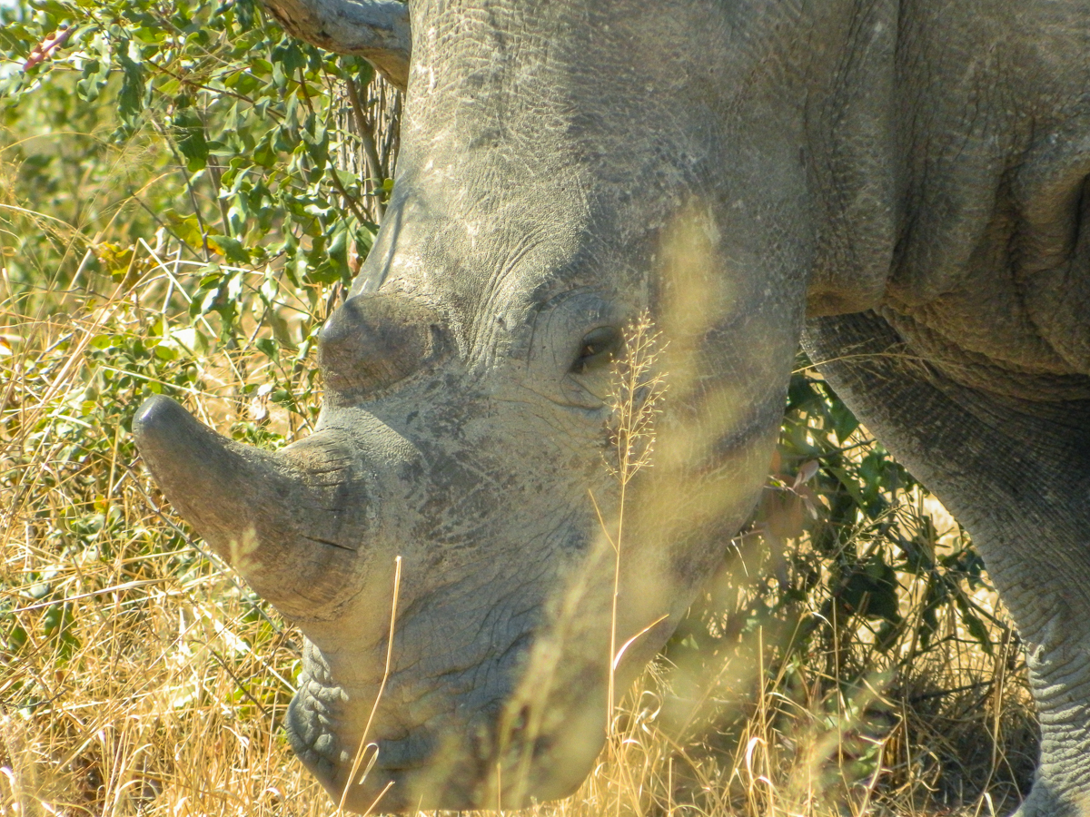 Rhino Matobo National Park Zimbabwe Rock formations