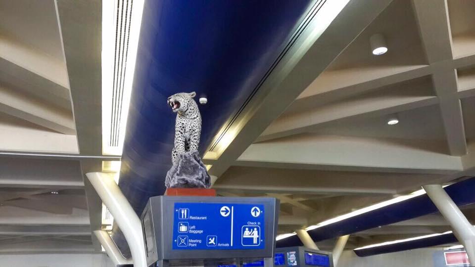 Harare International Airport Animals