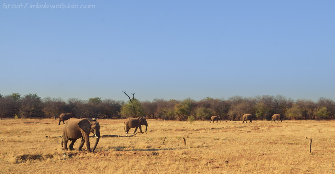 Matusadona National Park Kariba Zimbabwe Elephants 01