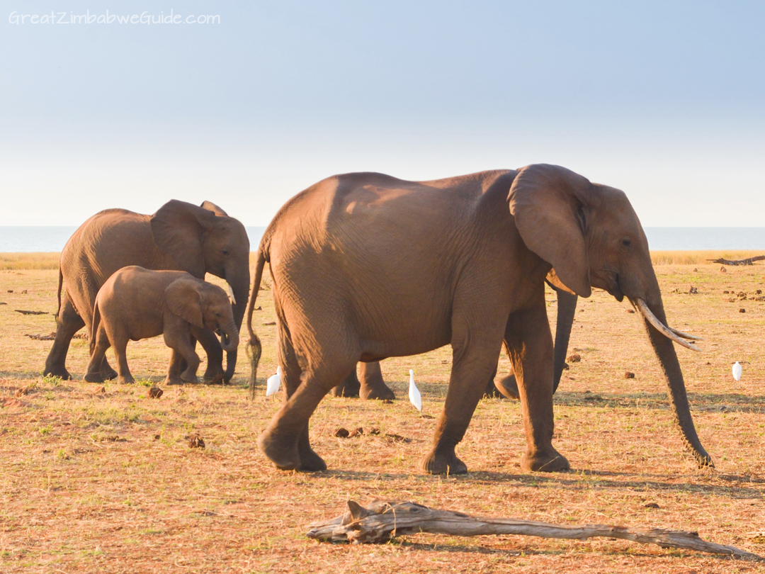 Spurwing Zimbabwe Kariba Game Drive 08