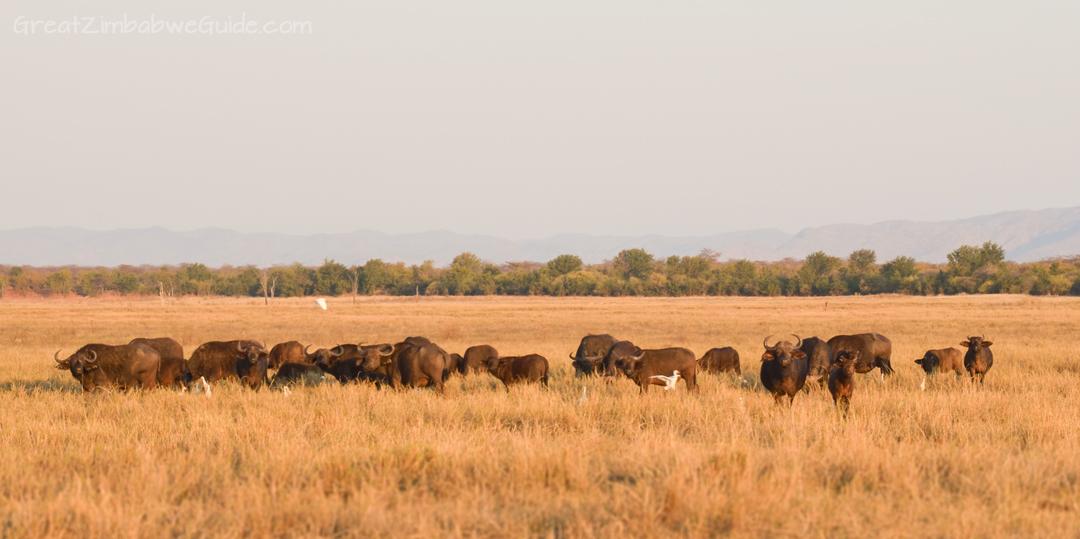 Spurwing Zimbabwe Kariba Game Drive 19