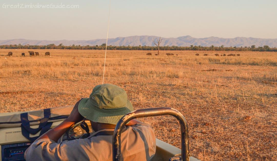 Spurwing Zimbabwe Kariba Game Drive 20